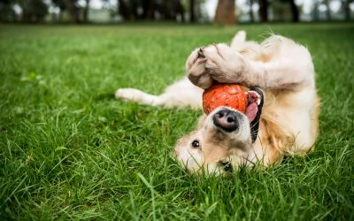 South Sound Residents Can Now Book Puppy Playdates from Home