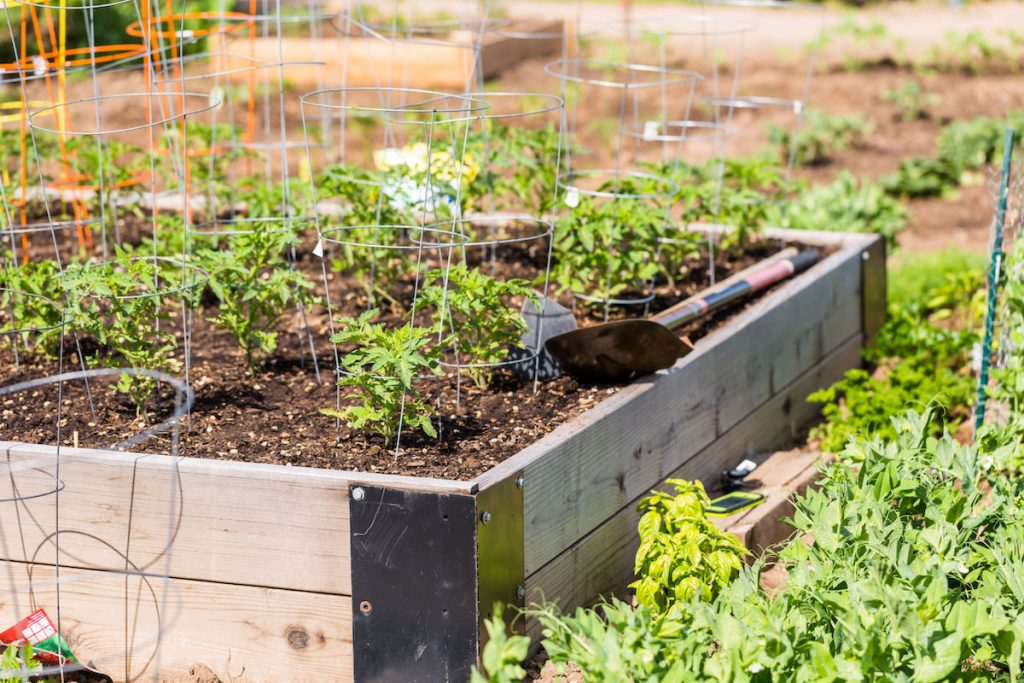 backyard-garden-bed