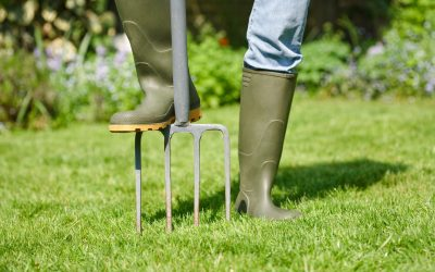5 Lawn Care Tips for Your New Home That Are Budget and Planet-Friendly